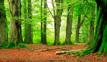 Best Selling Themes Forest Themes Forest Wallpapers